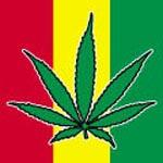 Cannabis Coffeeshops in Amsterdam