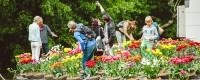 Tulip Island amsterdam vondelpark