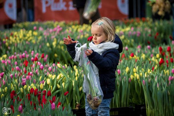 Tulip Island Amsterdam