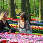The Best Options To Visit Keukenhof Gardens from Amsterdam